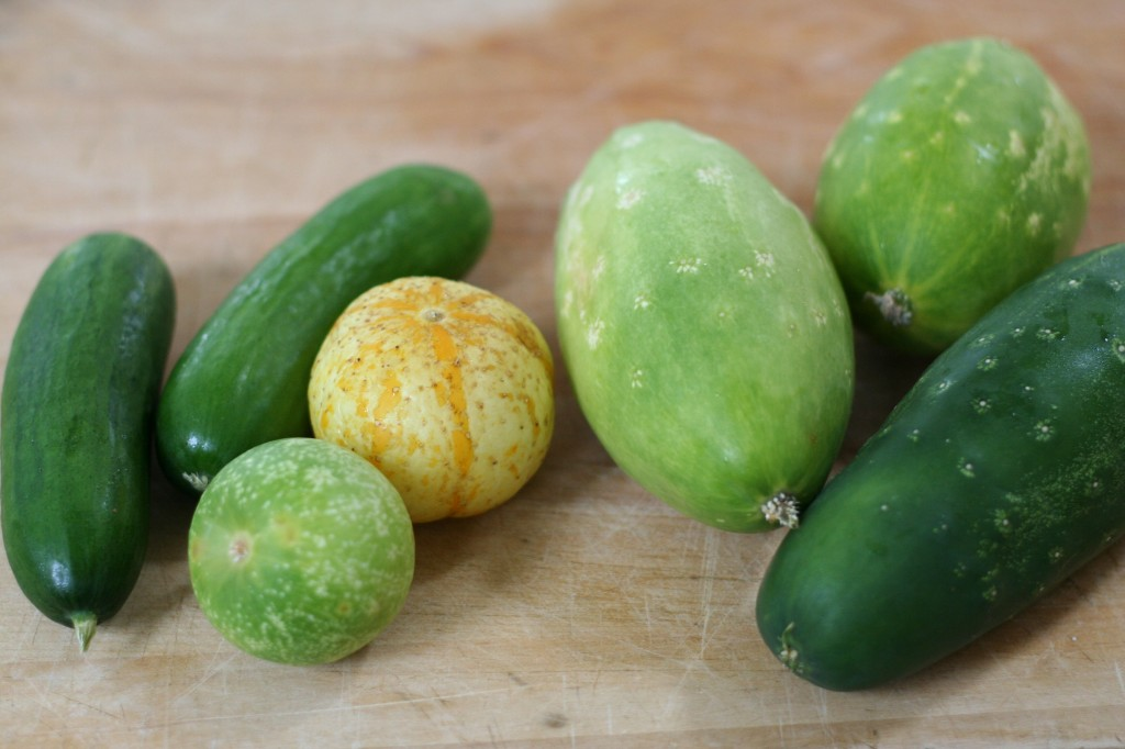 Assorted Garden Cucumbers